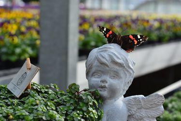engelpot-met-vlinder