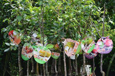 fruitbomen-kopen