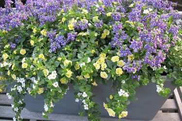 mooie-plantencombinatie