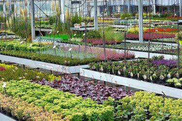 plantenkwekerij-oktober