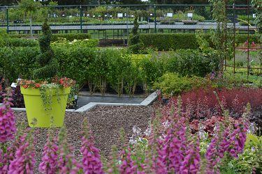 plantenkwekerij-vasteplanten
